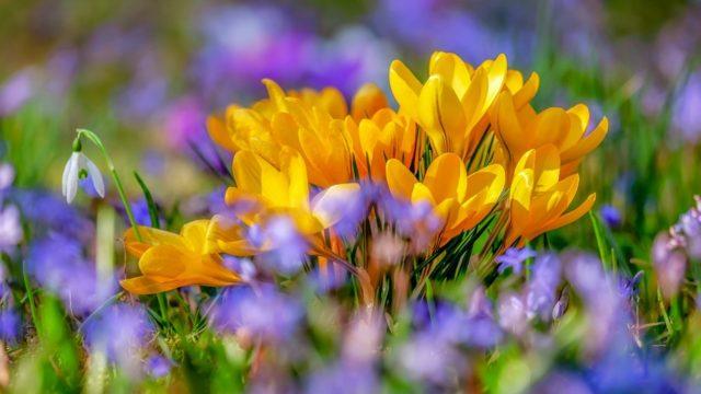 花束 黄色