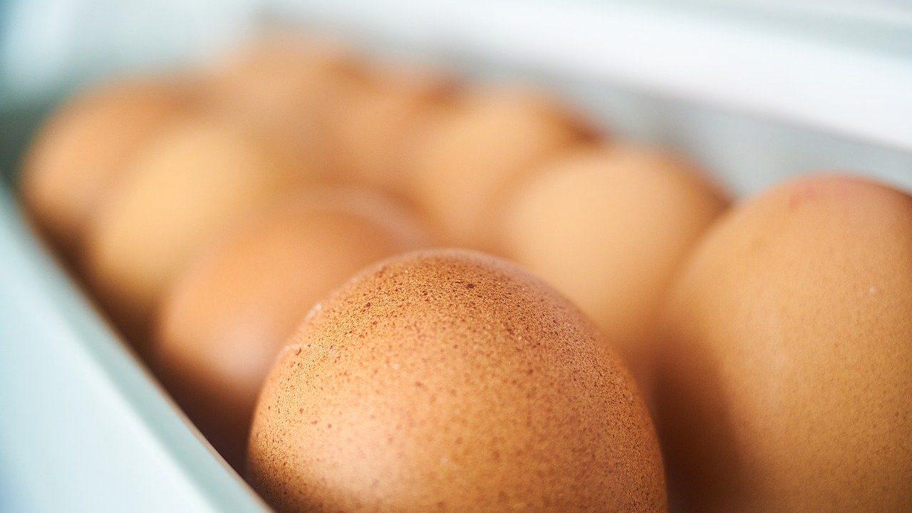 卵 ケース